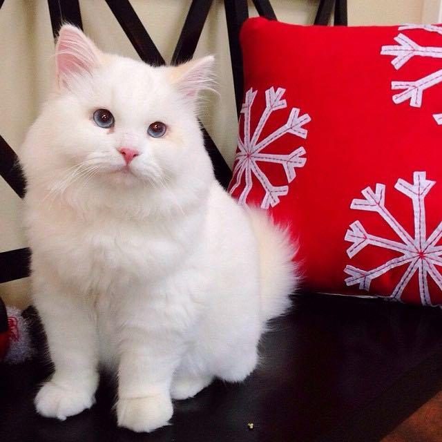 立ち姿も奇麗な猫