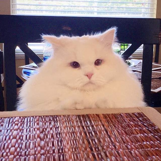 興味津々で見つめる猫