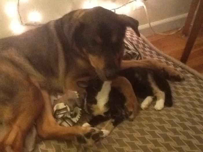 猫の面倒を見る犬