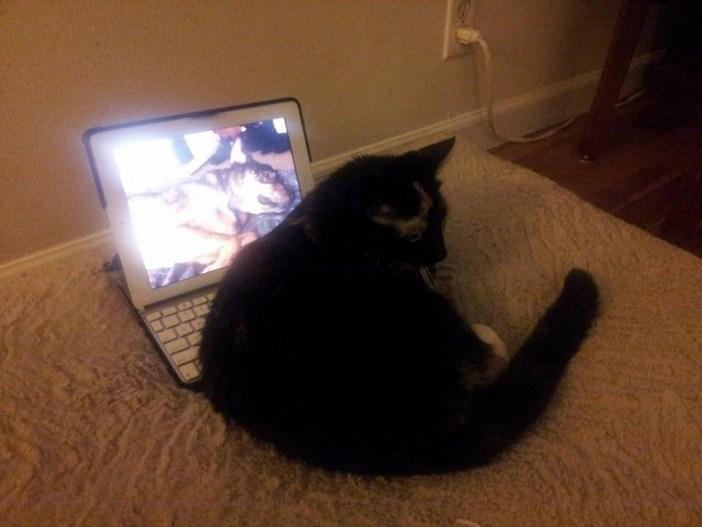 DVDの前で丸くなる猫