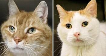 二匹の大親友の猫