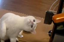 掃除に猫パンチする猫