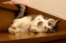 かわいいポーズでお出迎えする猫