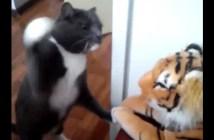 トラのぬいぐるみに猫パンチする猫