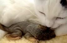 リスを育てる母猫