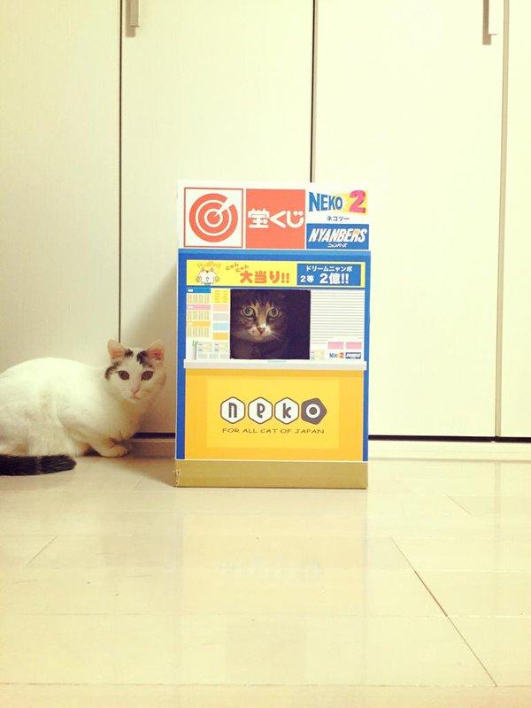 宝くじを販売する猫