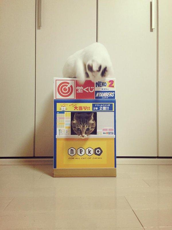 販売員さんを見る猫