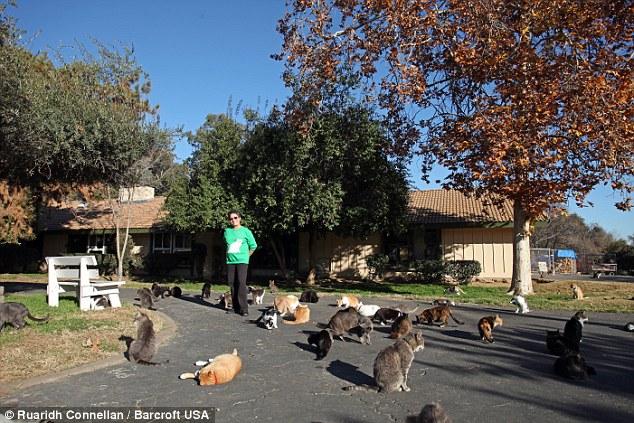 家の外にも猫がいっぱい