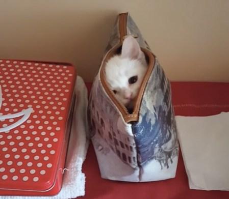 バッグの中に隠れる子猫