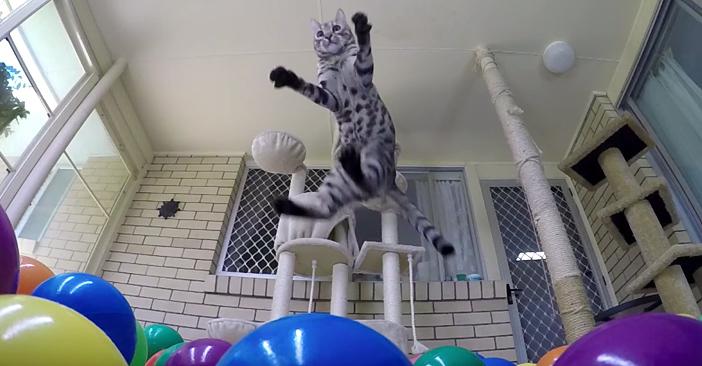 ボールに飛び込む猫