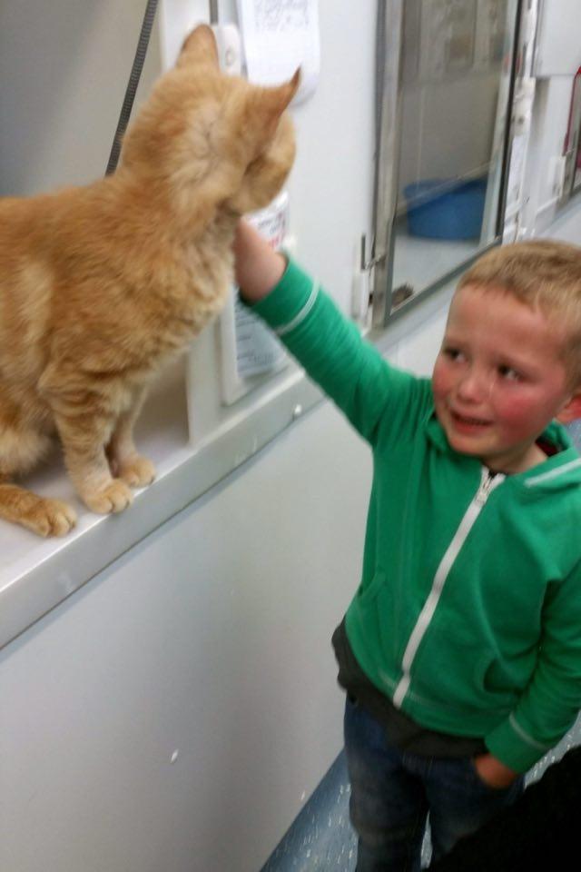 保護施設で猫と再会