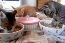 食事中に眠くなった猫