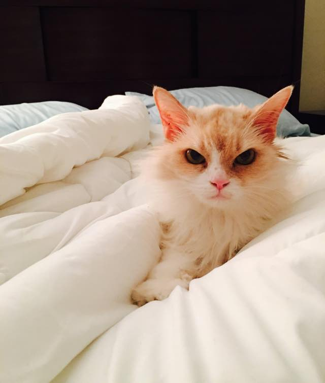 どんな時も目つきが悪い猫