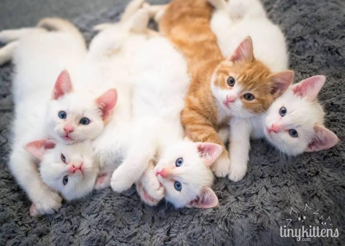 みんなで集合写真を撮る5匹の子猫