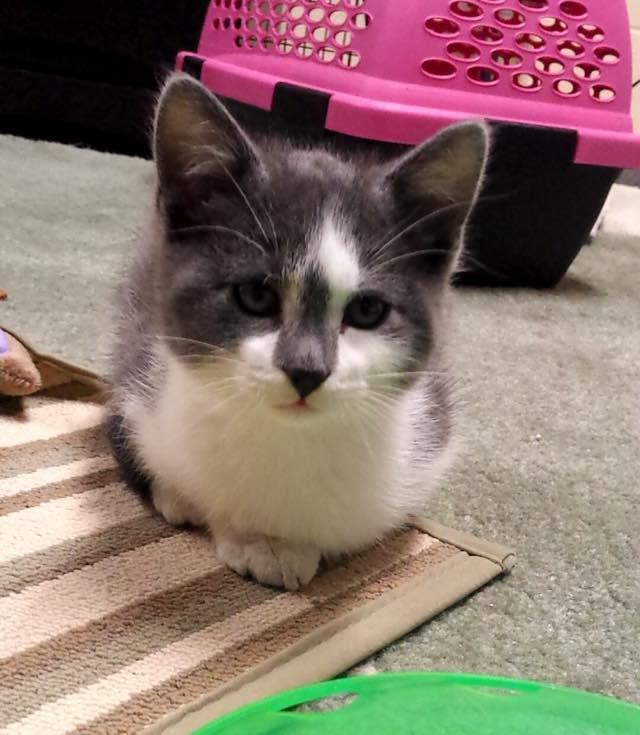 小さくなる保護子猫