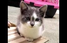 保護子猫の変化