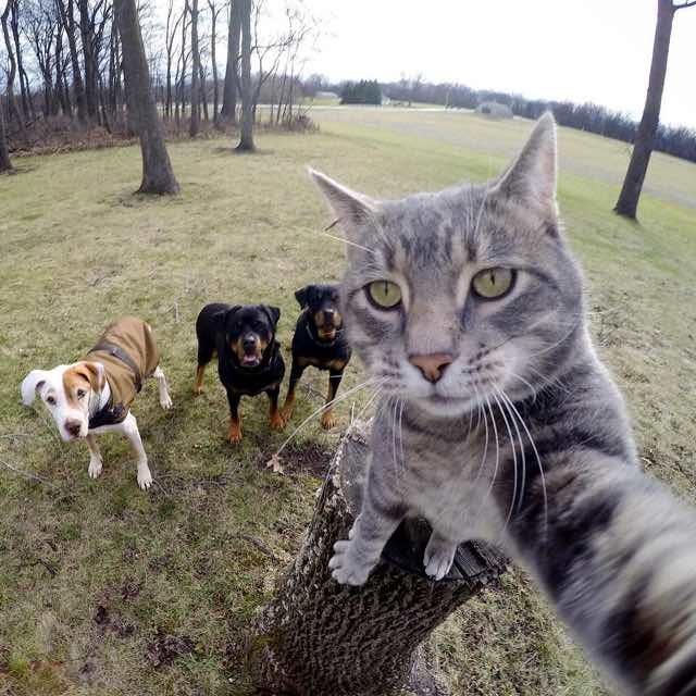 犬といっしょの猫の自撮り写真