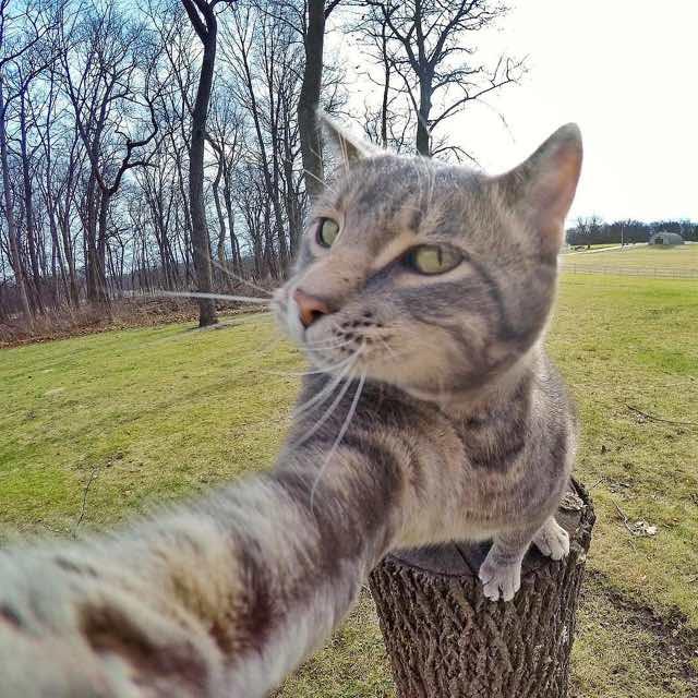 かっこいい猫の自撮り写真