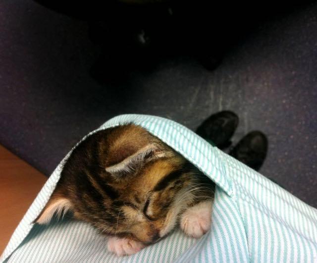 ポケットの中で眠る子猫