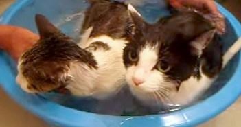 猫の親子がお風呂
