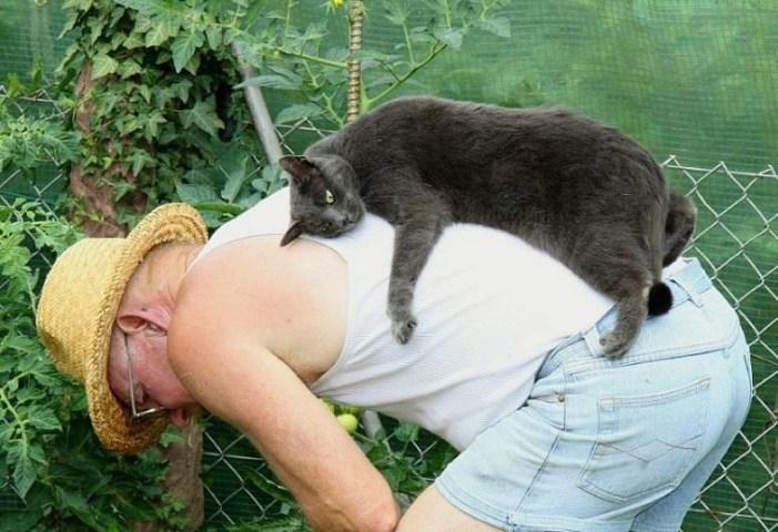 おじいちゃんの背中でくつろぐ猫