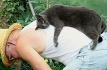 おじいちゃんが大好きな猫