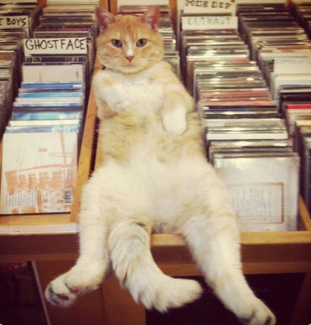 棚でくつろぐ猫