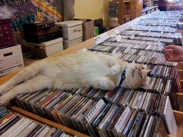 ゴロンと眠る猫