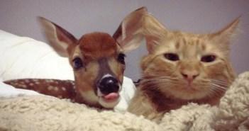 シカと友達になった猫