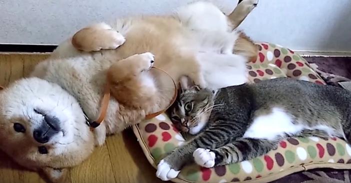 たれーとする猫