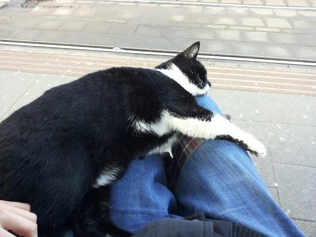 乗客に懐く猫