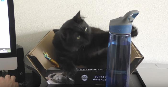 猫と水の入れ物