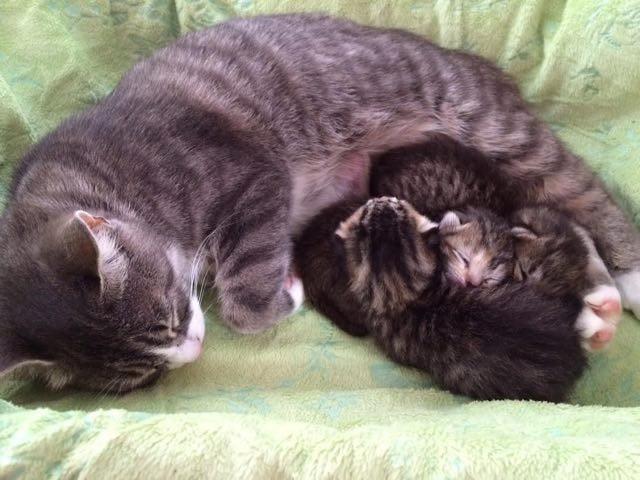 3匹の子猫と母猫
