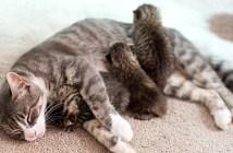 3匹の子猫を育てる母猫
