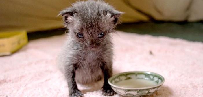 大雨の中救助された子猫