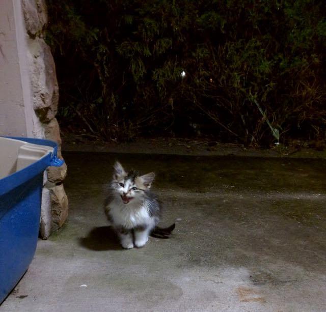 心細そうな子猫
