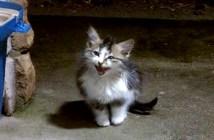 嵐の中の子猫