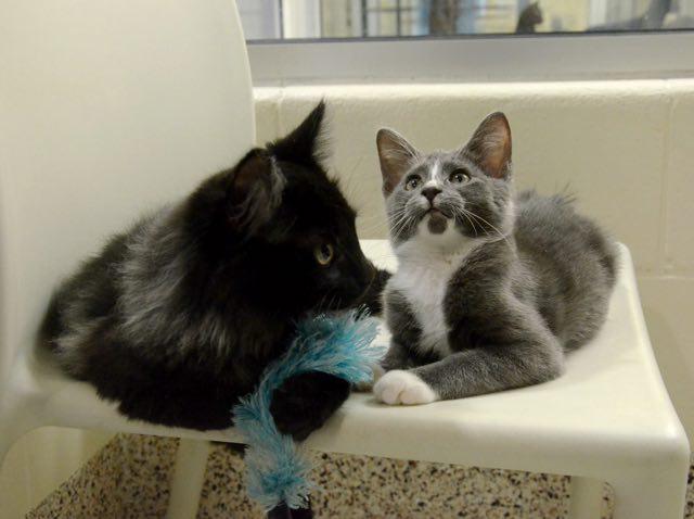 目の見えない猫と友達の猫
