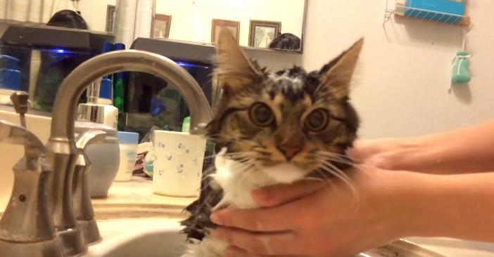 水が大好きな猫ロージー