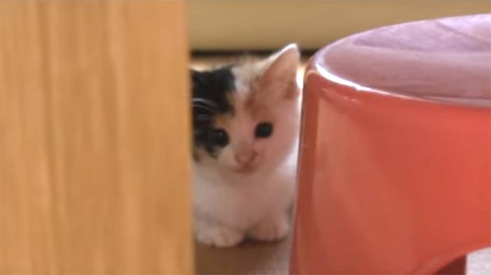 ものかげに隠れる子猫