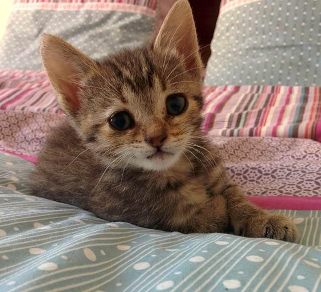 治ってきた子猫