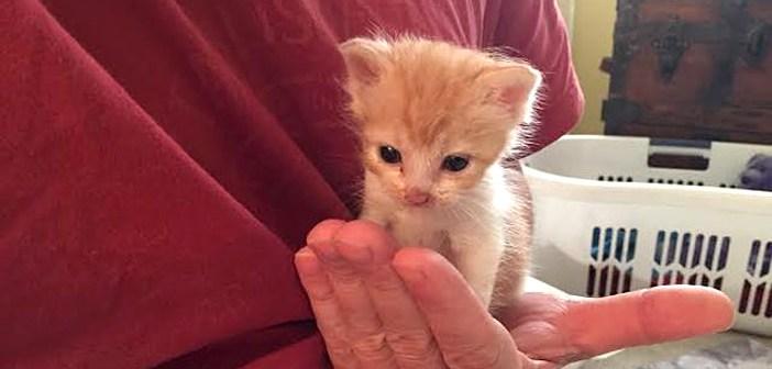 保護された日の夜に、初めてギュッとしてもらった子猫。それ以来、ハグ癖がついてしまい… ( *´艸`) 7枚