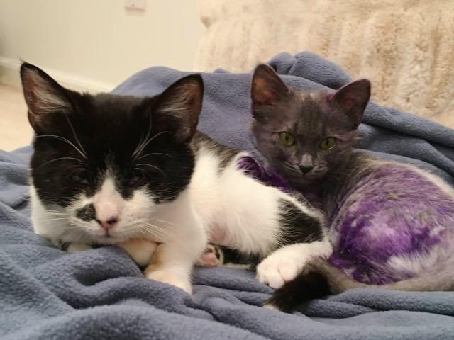 いっしょにくつろぐ紫色の子猫
