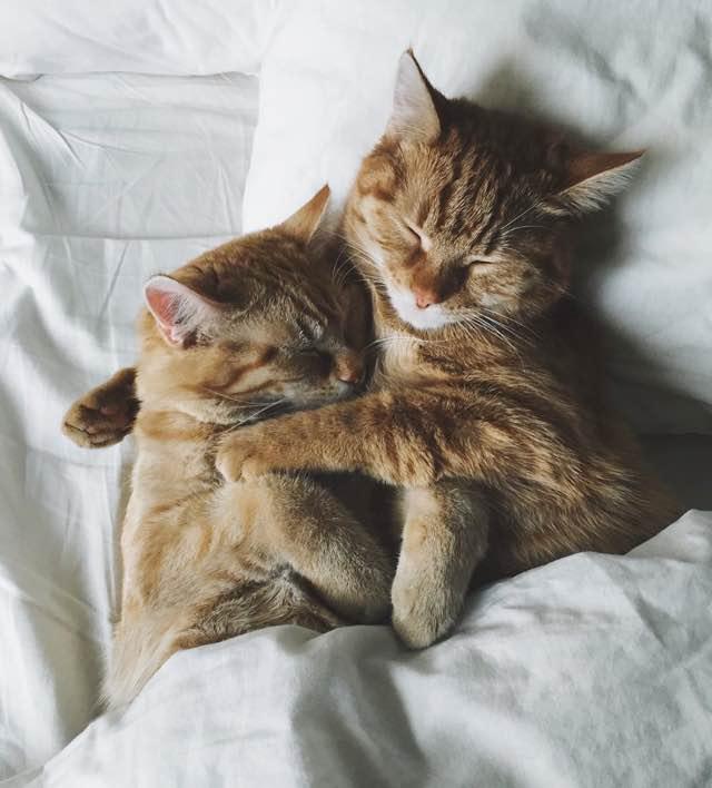 抱きしめて眠る猫