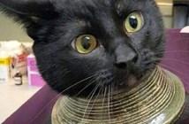 壺に頭を突っ込んだ猫