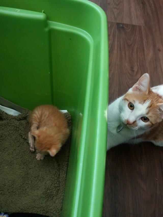 先住猫との出会い