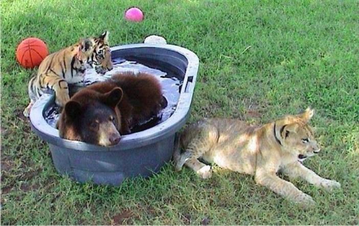 子供の頃からのトラとライオンとクマ