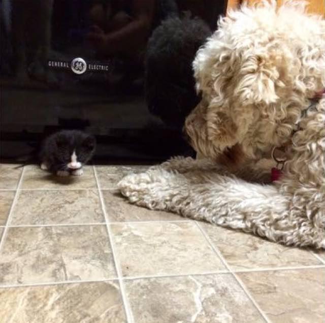 犬に見守られる子猫