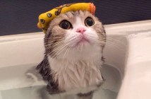お風呂が大好きな猫