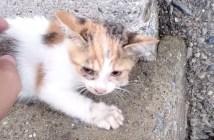 橋から落ちた子猫